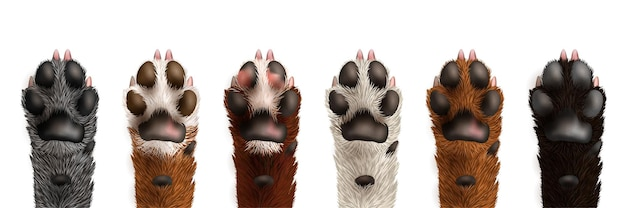 Conjunto de patas fofas e realistas de cachorro preto branco cinza marrom