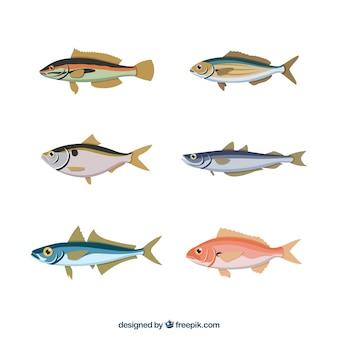 Conjunto de peixes coloridos na mão desenhada estilo