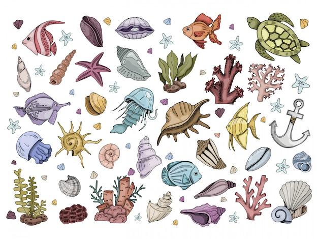 Conjunto de peixes, conchas, corais, animais marinhos