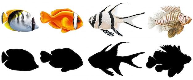Conjunto de peixes de água salgada