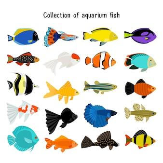 Conjunto de peixes de aquário. peixes de mergulho subaquático isolados no fundo branco. ilustração colorida de animais marinhos