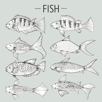 Conjunto de peixes de mão desenhada, conjunto de desenhos de comida saudável