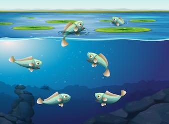 Conjunto de peixes debaixo d'água