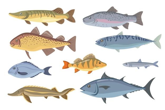 Conjunto de peixes do mar e de água doce.