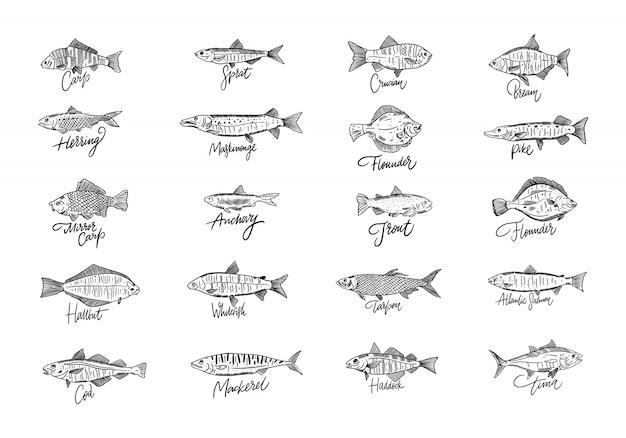 Conjunto de peixes. frutos do mar de mão desenhada. estilo de gravura.
