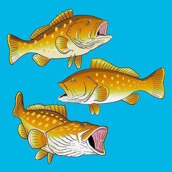 Conjunto de peixes garoupa de borda amarela para coleta de pacote de peixes esportivos