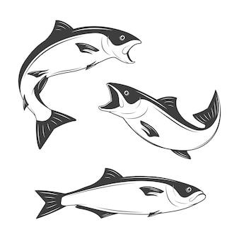 Conjunto de peixes monocromáticos