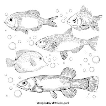 Conjunto de peixes na mão desenhada estilo
