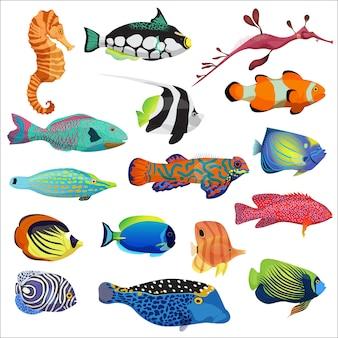 Conjunto de peixes tropicais
