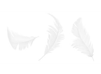 Conjunto de penas brancas de pássaro ou anjo em várias formas, isoladas no fundo