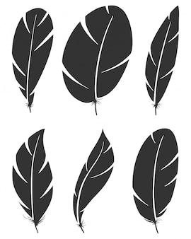 Conjunto de penas de asa de pássaro diferentes
