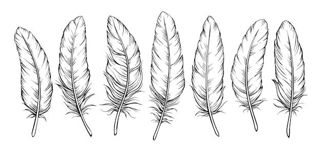 Conjunto de penas de esboço. desenho de pena de pássaro, isolado.