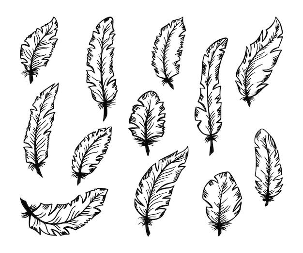 Conjunto de penas de pássaros de mão desenhada.