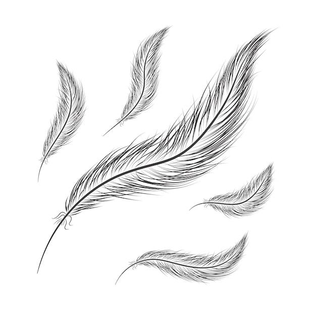 Conjunto de penas desenhadas à mão em um fundo branco