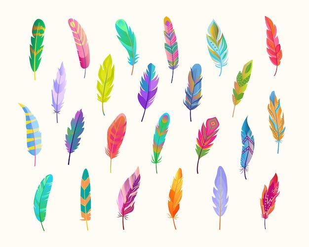 Conjunto de penas exóticas de pássaros