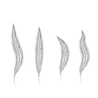 Conjunto de penas são desenhados à mão em um fundo branco.