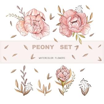 Conjunto de peônia vector aquarela. flores em aquarela.