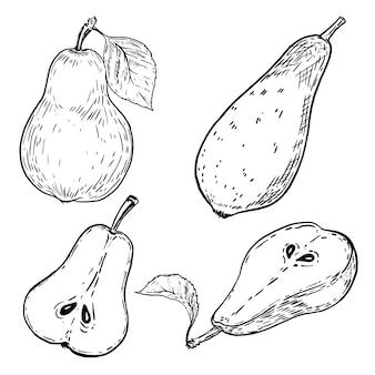 Conjunto de peras de mão desenhada no fundo branco. elementos para o menu, cartaz. ilustração