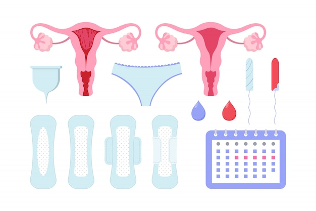 Conjunto de períodos femininos
