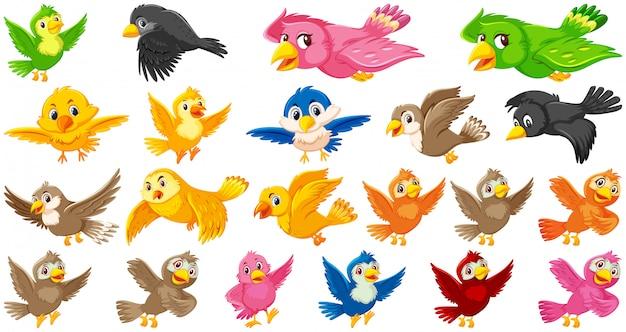 Conjunto de personagem de desenho animado de pássaro