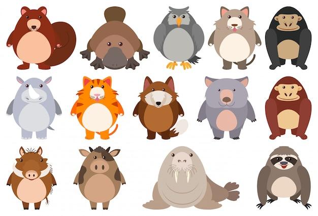 Conjunto de personagem de desenho animado