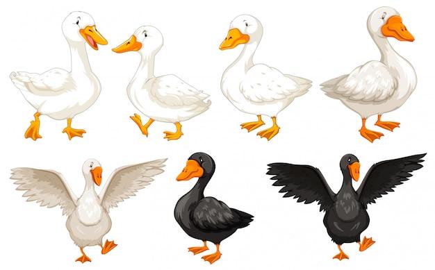 Conjunto de personagem de pato
