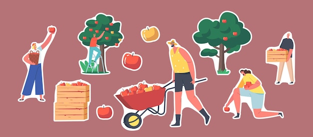 Conjunto de personagens de jardineiro de adesivos colhendo maçãs no jardim. homem com carrinho de mão, caixa de madeira com colheita de maçã, árvore com frutas frescas maduras. ilustração em vetor desenho animado pessoas, manchas isoladas