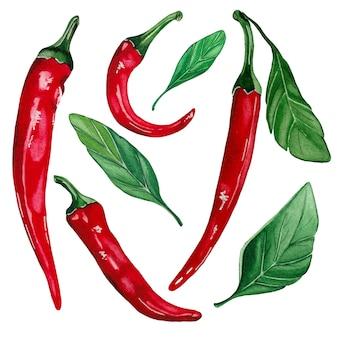 Conjunto de pimenta malagueta