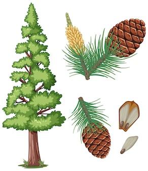 Conjunto de pinha e agulhas de pinheiro isoladas