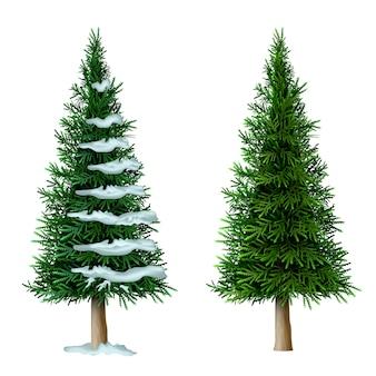 Conjunto de pinheiro realista vector isolar