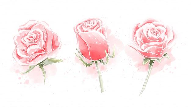 Conjunto de pintura em aquarela de rosas