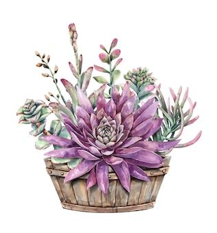 Conjunto de pintura em aquarela de suculentas e flor de lótus com metade do plantador de barril de vinho.