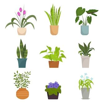 Conjunto de plantas caseiras em vasos