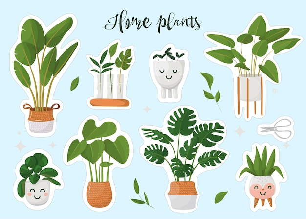 Conjunto de plantas caseiras em vasos.