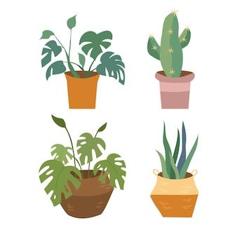 Conjunto de plantas caseiras