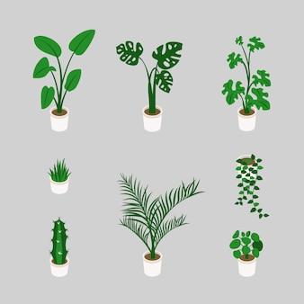 Conjunto de plantas da moda crescendo em vasos em isométrico