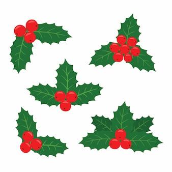 Conjunto de plantas de azevinho para cartões