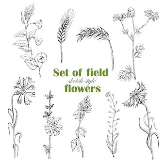 Conjunto de plantas de campo isolado no estilo de desenho