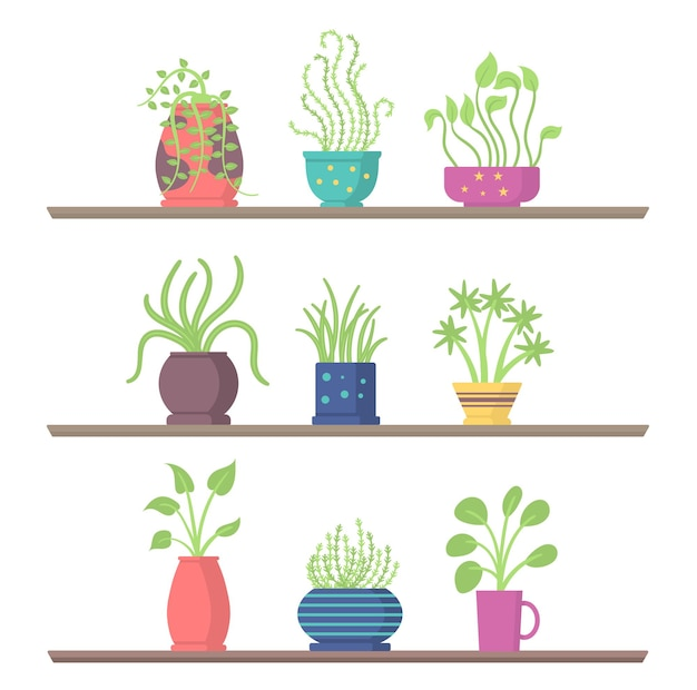 Conjunto de plantas de casa nas prateleiras, vaso de flores de jardim para a sala ou escritório e interior verde da casa