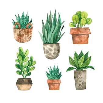 Conjunto de plantas de casa pintadas à mão em aquarela