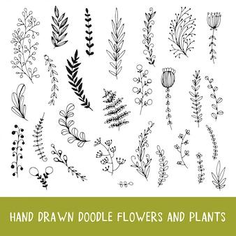 Conjunto de plantas de doodle botânico natural.
