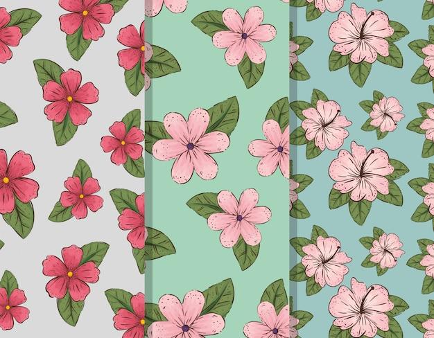 Conjunto de plantas de flores e folhas exóticas