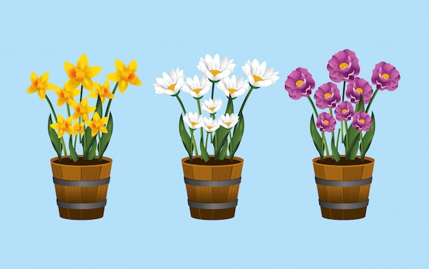Conjunto de plantas de flores exóticas dentro do vaso