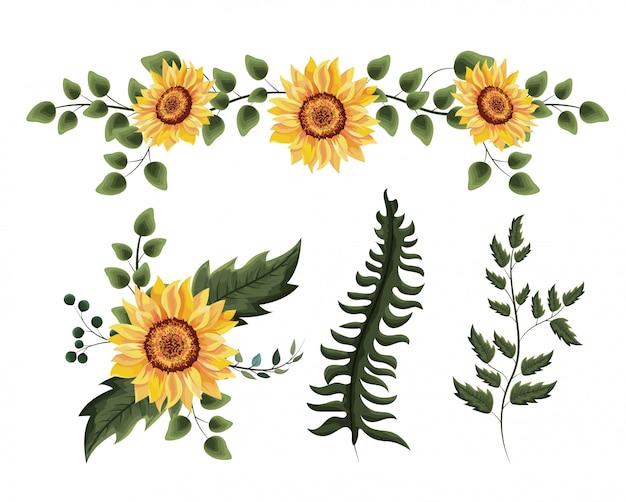 Conjunto de plantas de girassóis exóticas com folhas de galhos