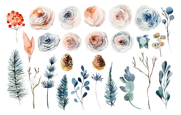 Conjunto de plantas de inverno em aquarela, rosas cor de rosa e brancas, flores silvestres, ramos de pinheiro e eucalipto