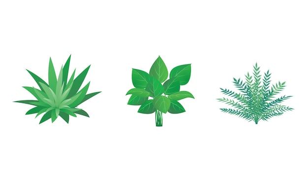 Conjunto de plantas de jardim, arbustos e arbustos ilustração vetorial