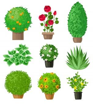 Conjunto de plantas de jardim.