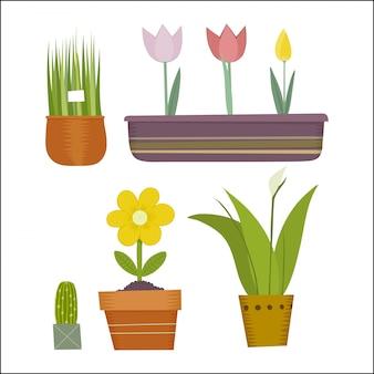 Conjunto de plantas de maconha