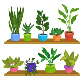 Conjunto de plantas decorativas em casa, plantas de casa para ilustrações de interiores, sobre um fundo branco