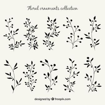 Conjunto de plantas desenhadas à mão